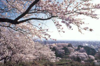 『置賜さくら回廊』で桜をめぐる春ドライブへ