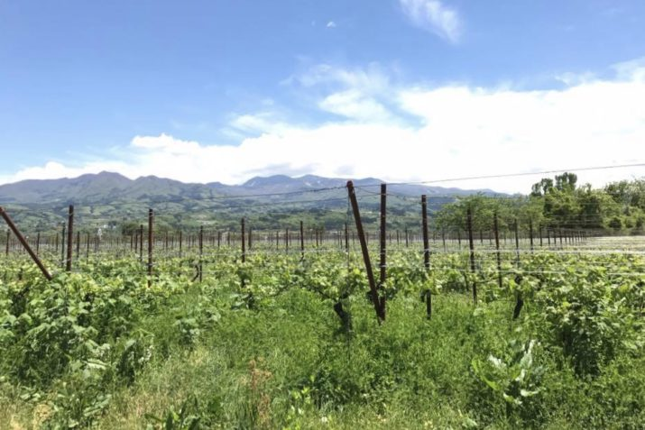 やまがたワインバル in かみのやま温泉・ワインツーリズムやまがた / 山形を食べる⑨