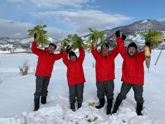 冬の体験「雪下だいこん掘り」スタート