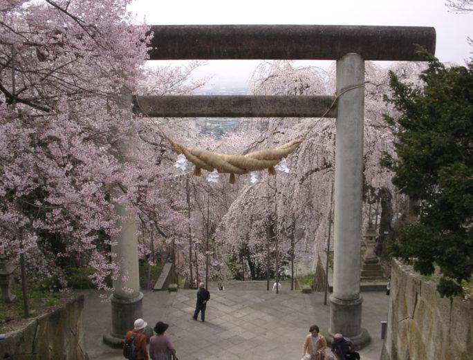 ひと足早く 桜を愛でる旅をご計画しませんか