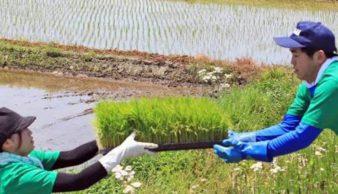 山形座瀧波に泊まって「夢ごこち」の田植え体験!参加者募集