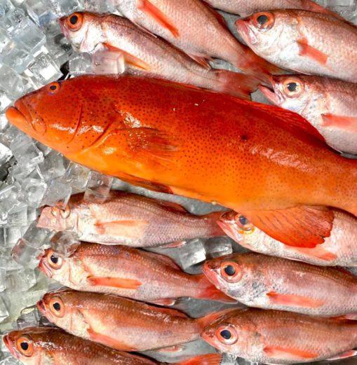 「山形座 瀧波」の魚料理